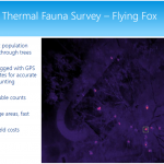 Thermal-flying-fox